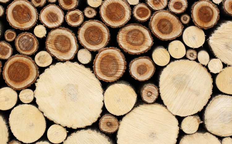 Nature Makes Wood. Could a Lab Make It Better?